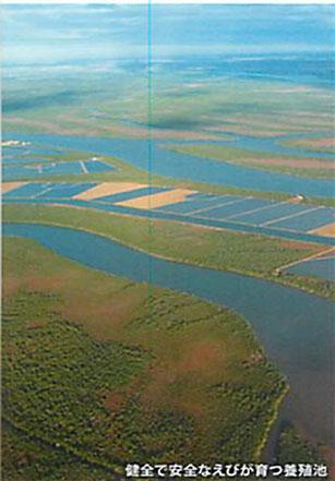 マダカスルージュ養殖池