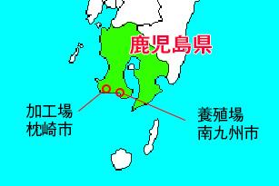 白姫えび 鹿児島県
