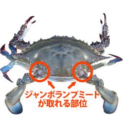 渡り蟹ジャンボランプミートの場所